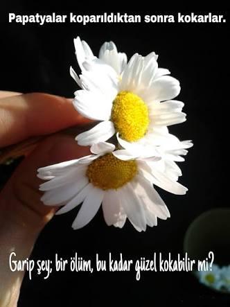 ahsen24