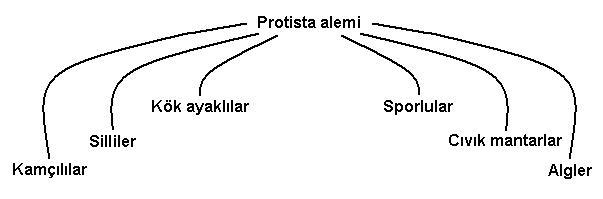 ProtistaAlemi