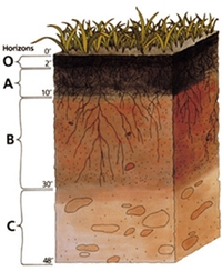 Toprak Nedir