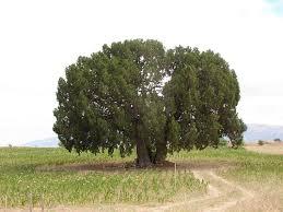 resim teknolojiyi anlatıyor şu an bu resimdeki ağaç olmazaydı bu site yoktu.