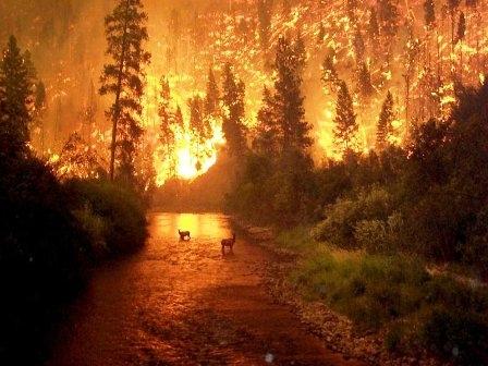 Yangın Nedir