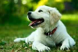 köpekler çünkü sadıklardır.