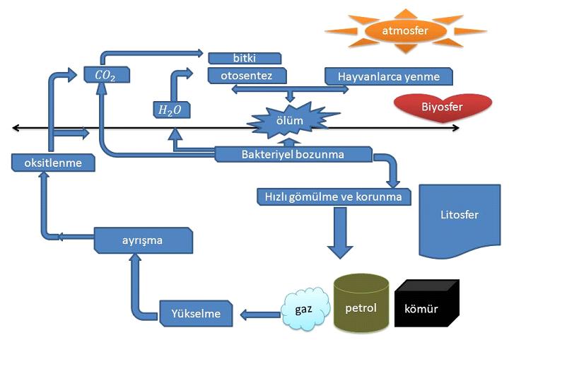 Petrol oluşum süreçi şeması
