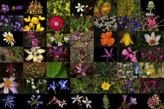 Endemik Bitki Slaytı Ön Kapak