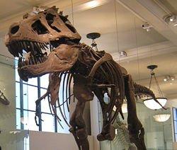 Paleontoloji