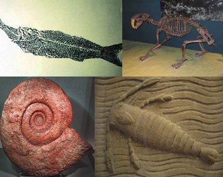Paleontoloji - Fosil