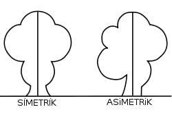 Asimetrik Nedir