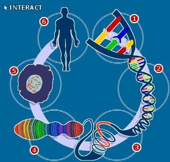 Bir insanda kaç hücre vardır