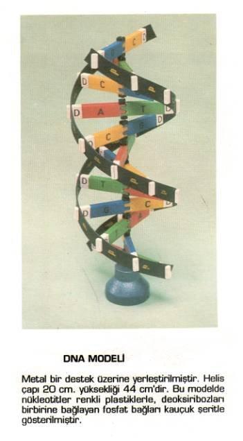 DNA Slaytı Ön Kapak