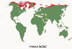 Soğuk İklimler - Tundra İklimi