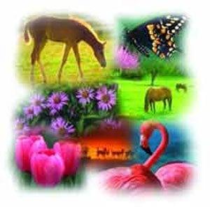 Biyolojik Çeşitliliğin Önemi